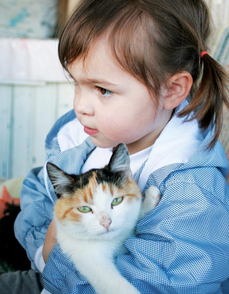 toddler holding cat. You can tell the cat is looking at the cat-friendly baby gate, ready to head through it as soon as she can escape!