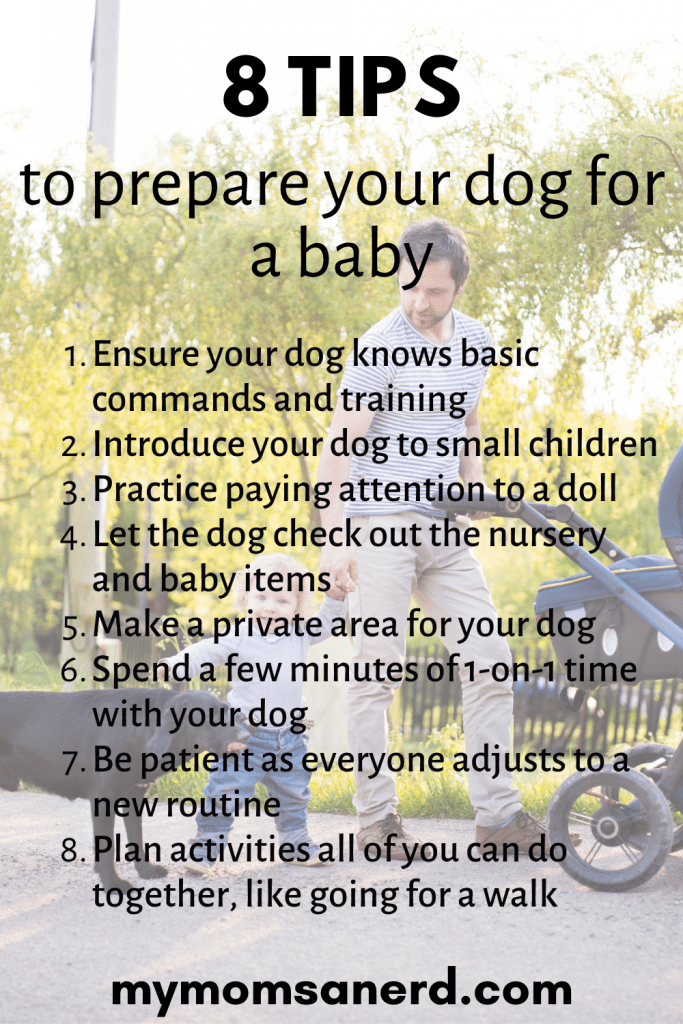 Read more about the article How To Prepare A Dog For Baby | 8 Simple Tips Expecting Parents Can Use Today