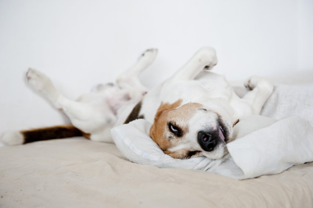 relaxed dog