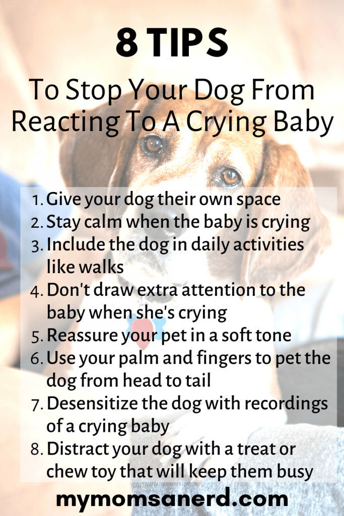 Read more about the article 8 Tips To Stop A Dog From Reacting To A Crying Baby