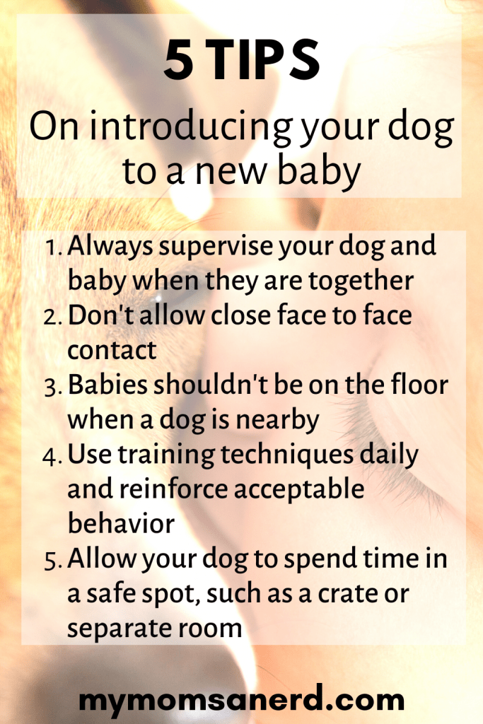 Read more about the article How to Introduce a Dog to Your Baby | 5 Tips for New Parents