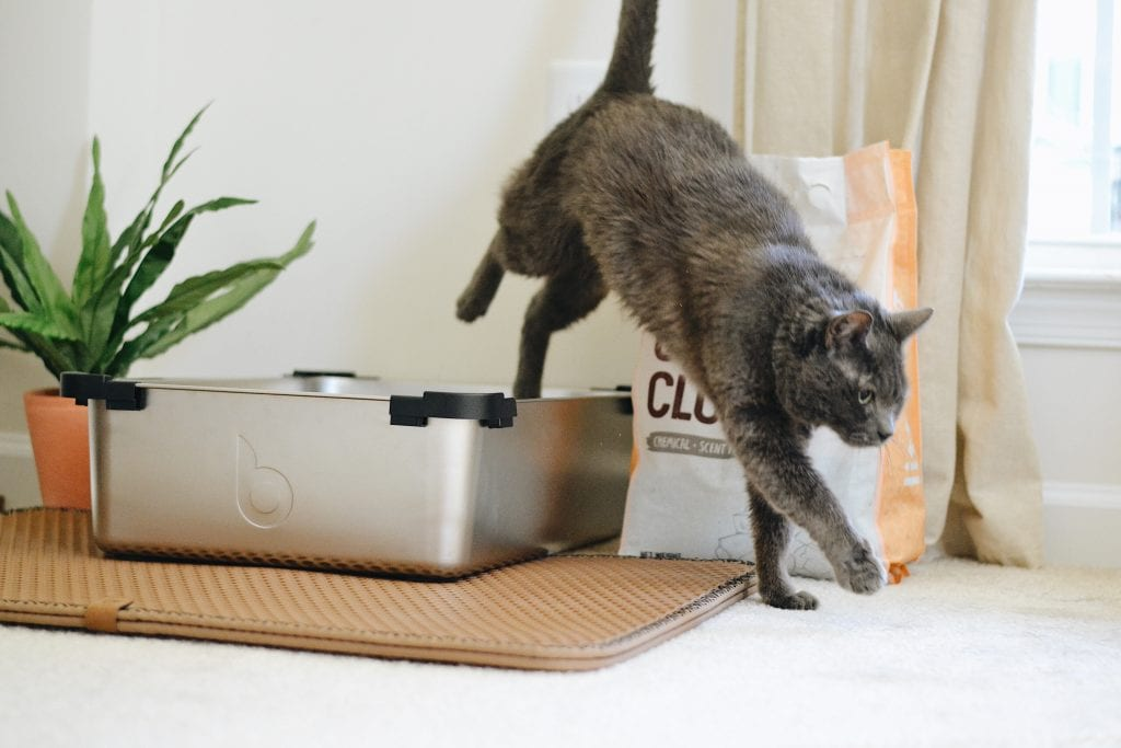 how to baby proof your cats litter box