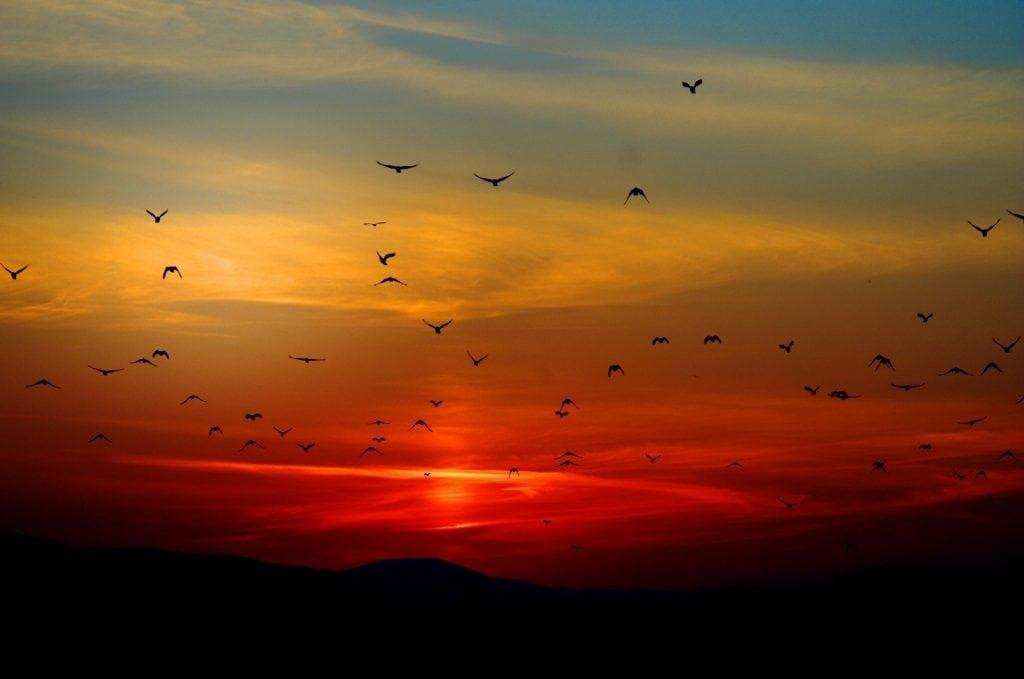 mountain sunset with birds